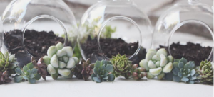Terrarium & Succulents Class @ LaFayette-Walker County Library | LaFayette | Georgia | United States